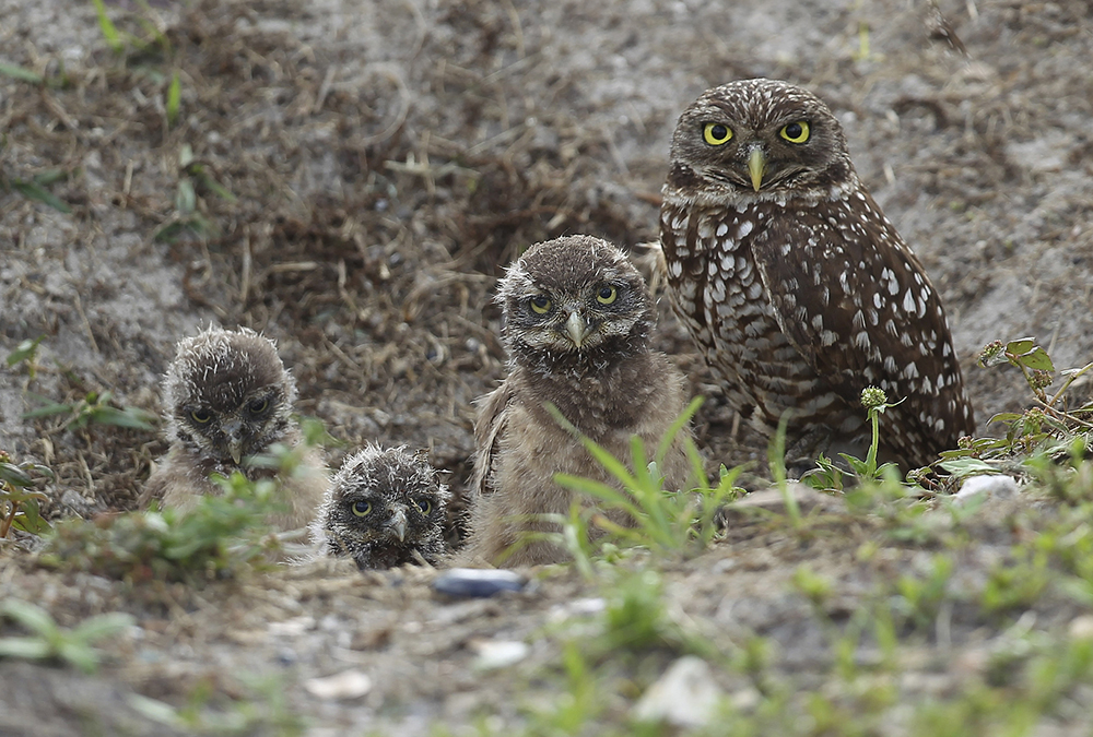 Owls and the Airport