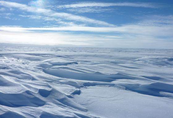 Imagine facing endless white, day after day, in frozen Antarctica. (AP)