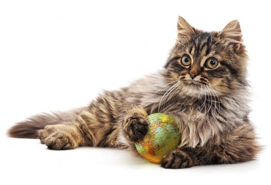 Cats have traveled across the world, spreading their DNA.