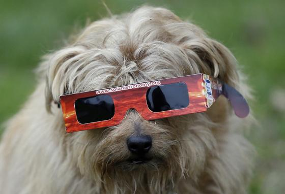 A dog gets its own glasses to view an eclipse in London, England, in 2015. (AP)