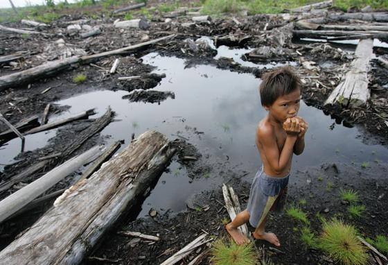 An Indonesian child plays where a forest is cleared on the island of Borneo. (AP)