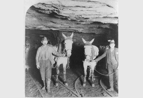 Miners hold mules in a mine shaft in 1900. (LOC)