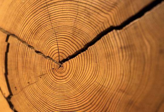 Rings show on a cut tree. Researchers can also drill a pencil-thin core. AP Photo
