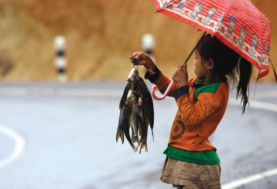 Along a road, a Laotian girl sells fish caught from a nearby stream.