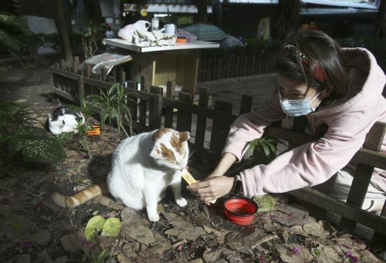 """Volunteer Yuju Huang feeds a street cat called Flower at a """"Cat Cafeteria"""" in Taipei, Taiwan. (AP/Chiang Ying-ying)"""