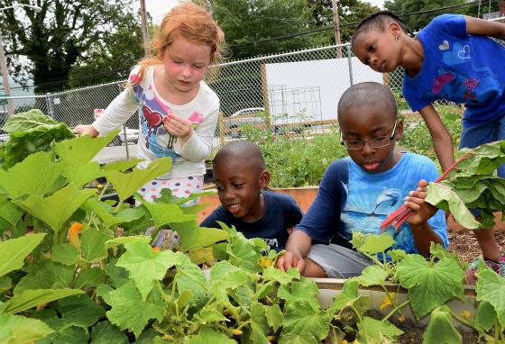 Kids pick vegetables at a community garden in High Point, North Carolina. Have you ever watched a plant grow from a seed? (Laura Greene/The Enterprise via AP)