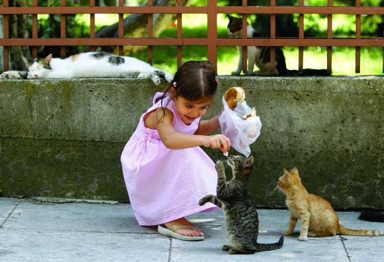 A girl feeds a group of stray cats in the courtyard of a mosque in Istanbul, Turkey. (AP/Ibrahim Usta)