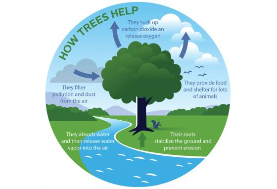 Trees help many parts of the world we live in. (Krieg Barrie)
