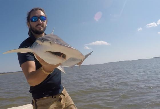 Bryan Keller holds a bonnethead shark next to the North Edisto River in South Carolina. Mr. Keller and other scientists found that sharks use Earth's magnetic field as a sort of GPS. (Bryan Keller via AP)