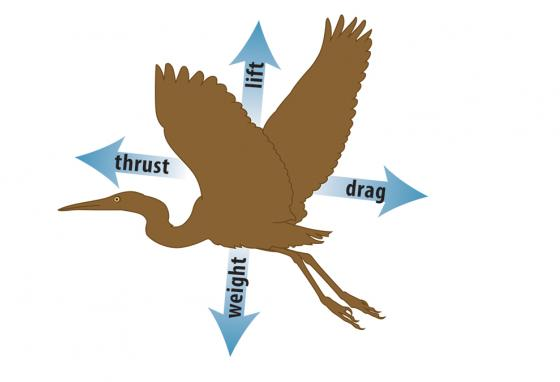 To fly, something needs enough thrust to overcome drag and enough lift to overcome weight. (Rich Bishop)