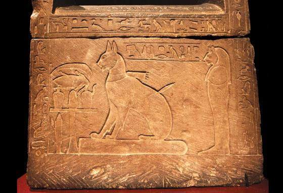 Cats were bred as domesticated pets in ancient Egypt. (AP)