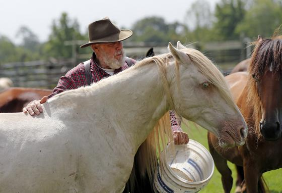 Bill Frank Brown feeds DeSoto, a 19-year-old stallion. DeSoto's DNA was checked. It confirmed he was a Choctaw horse. (AP)