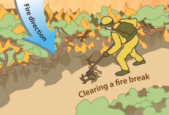 Fuel: Clearing fuel (brush, grass, and small trees) is hard work. But a forest fire will run out of fuel when it reaches a well-cleared break. (RB)