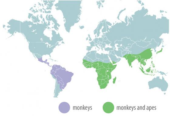 Monkeys live in both purple and green segments, but apes live only in the green.