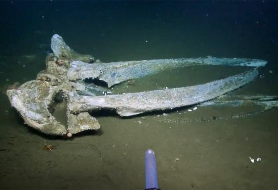 Scavengers, sharks, and hagfish have consumed the nutrient-rich blubber of the dead whale, leaving a clean skeleton behind. (Nautilus)