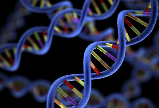 DNA is the code that God creates to determine how your body is made.