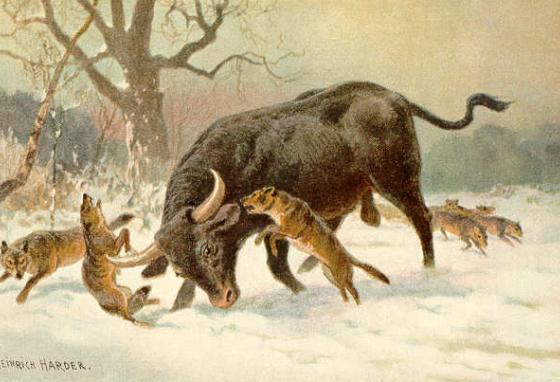 The aurochs were powerful. They trampled down the fields to keep invasive plants from growing there.