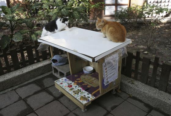 """Street cats Pipi, left, and """"the eldest brother"""" squat on the roof of a cat café. (AP/Chiang Ying-ying)"""