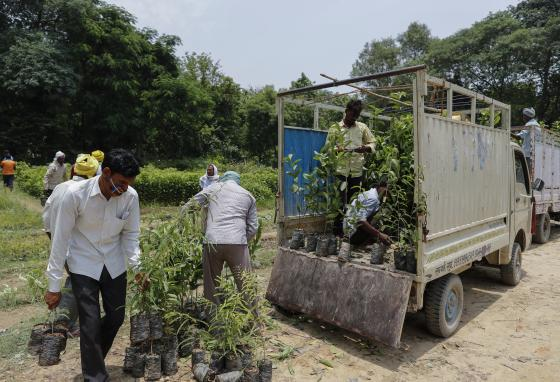 Citizens planted millions of trees in a few days. (AP/Rajesh Kumar Singh)