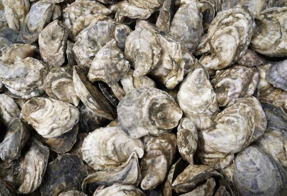There's more than one way to recycle oyster shells. (AP/Robert F. Bukaty)