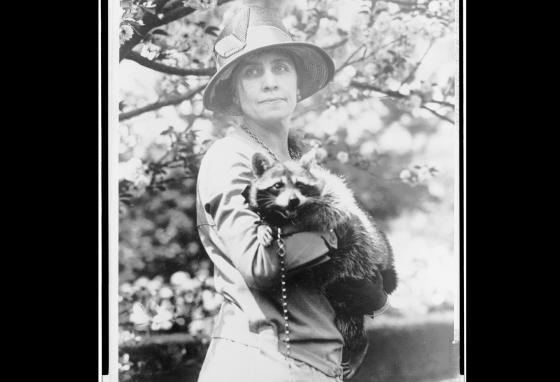 Mrs. Coolidge holds her pet raccoon Rebecca. (Library of Congress)
