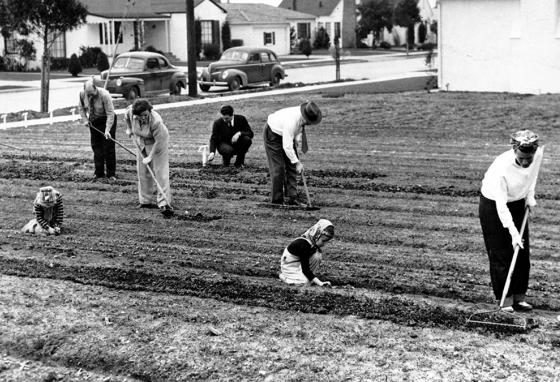 American neighbors work together in a community victory garden on March 24, 1943. (AP)