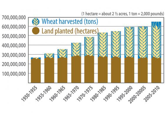 This chart shows that over decades since the 1950s, more wheat was grown on the same amount of land. (RB)