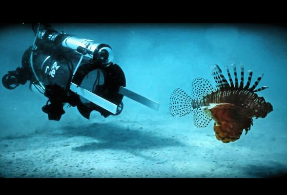 In a test, this robot sucked up 15 lionfish in two days. The fish were later sold for food. (AP)