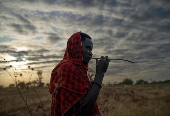 Saitoti Petro brushes his teeth with a stick before taking his herd to the fields in the village of Narakauwo, Tanzania.