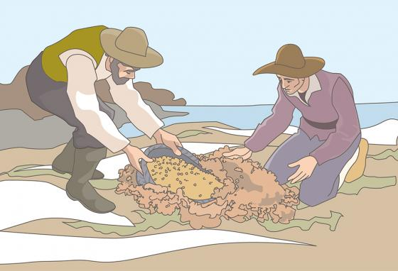 God made it possible for the Pilgrims to find buried treasure—corn kernels. (RB)