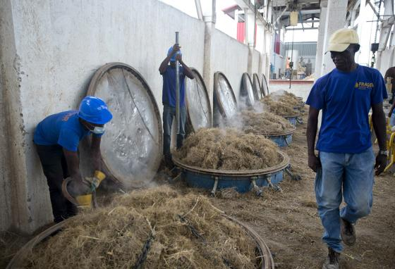 Vetiver roots are loaded into vats to begin the process of extracting their oil, which is used in fine perfumes. (AP)
