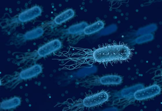 "Bacteria are small organisms that swim around using fins or rotors called ""flagella."""