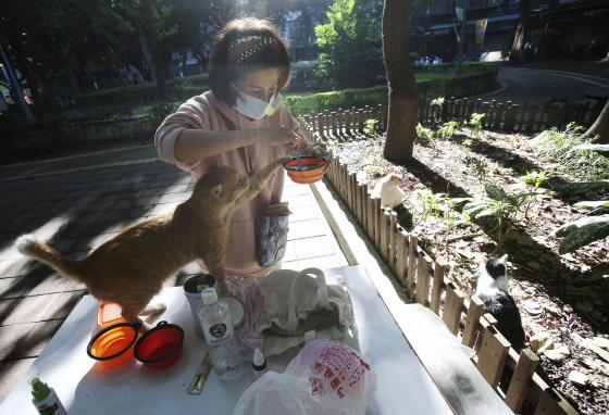 Volunteers like Yuju Huang buy food to feed the cats and set up the cat cafés. (AP/Chiang Ying-ying)