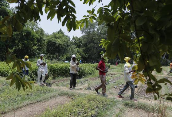 Some of the new trees will die. But with modern tracking methods and extra care, more trees will survive. (AP/Rajesh Kumar Singh)