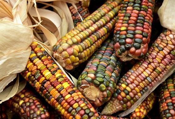 Corn is native to North America, which is where European settlers first encountered it.