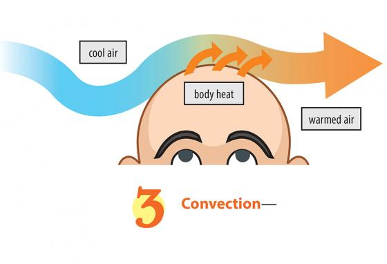 Convection is when heat escapes into moving air or water. Cooler air picks up heat from your head. It's why you wear a hat in winter! (R. Bishop)