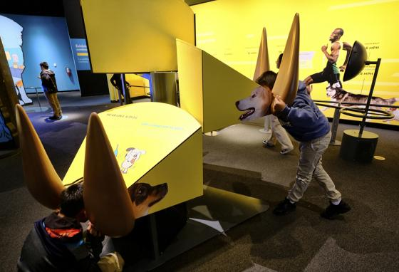 Kids put their heads into interactive displays that simulate a dog's sense of hearing. (AP)