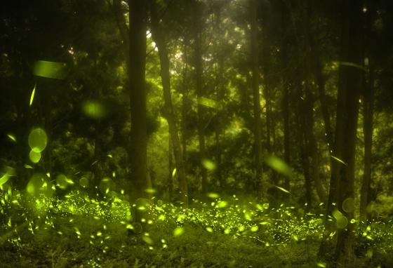 This amazing photo is actually layers of images of lightning bugs flashing in a meadow. (123RF)
