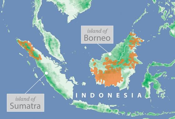 The orange areas mark orangutan habitats on the islands of Borneo and Sumatra.