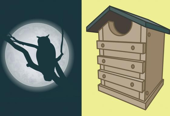 Some owls are active at night. Some prefer dusk and dawn. And a few owl species are active during the day. You could build an owl box like this. (RB)