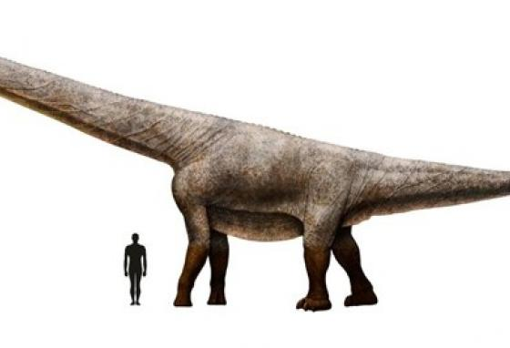 This illustration shows what the dino might have looked like. It is shown next to a human for scale. (Eromanga Natural History Museum)
