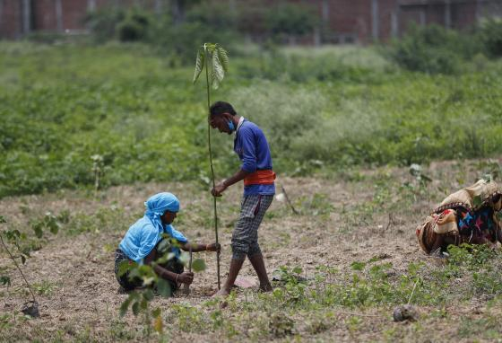 Trees help keep the air clean for the millions of people who live in India. (AP/Rajesh Kumar Singh)