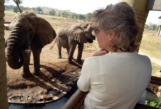 A tourist admires elephants as they drink from an open water point at a lodge inside the Taita Hills Game Sanctuary. Elephants normally drink water here during the dry season. (AP)