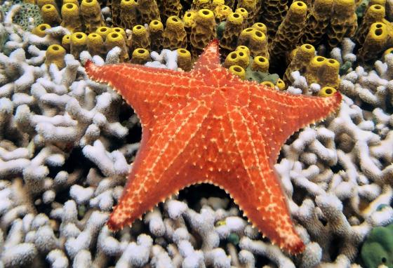 Sea stars eat sea urchins. Too many sea urchins would mean a lack of kelp for some fish and animals.