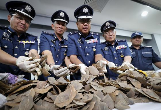 Seized pangolin scales, shown by Malaysian Customs officials after they stopped a smuggling operation in the Kuala Lumpur airport (AP)