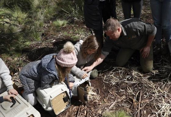 Children help release Tasmanian devils at Barrington Tops, Australia. Tasmanian devils are fierce. But they help clean up the world by getting rid of dead animal carcasses. (AP)