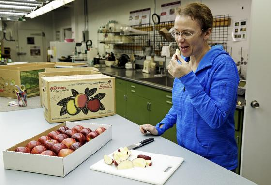 Kate Evans, a lead scientist at Washington State University's Tree Fruit Research & Extension Center in Wenatchee, tastes a slice of a Cosmic Crisp apple. (AP)