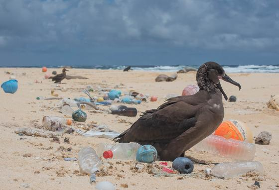 Plastic trash surrounds a seabird on a Pacific Ocean beach. (Ocean Cleanup)