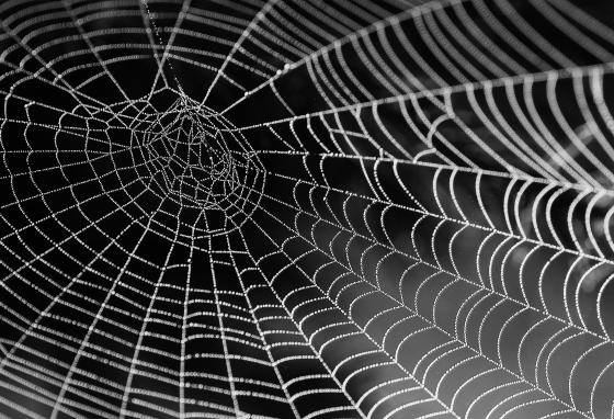 "In her lab, Ms. Hayashi is uncovering the genes behind each type of spider silk to create a sort of ""silk library."" (AP)"