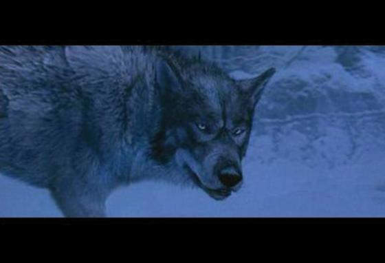 The wolf character, Maugrim, from the 2005 film version of The Lion, the Witch and the Wardrobe
